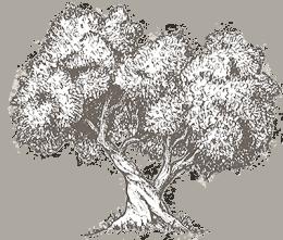 tree sketch2 e1559845913939