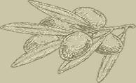 olive separator2